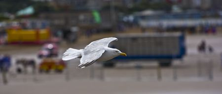 burnt out: Seagull flying taken from burnt out pier in Weston-Super-Mare