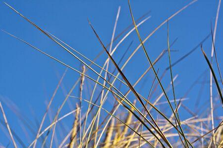 brean beach: Sand Dune Grass against blue sky