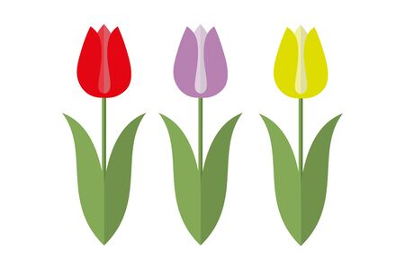 Three Tulips in Red, Yellow and Lilac with green leaves on a white background
