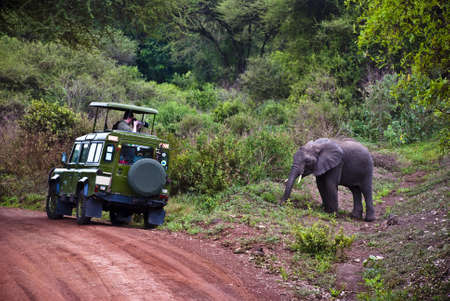 A man in a car taking a photo of an elephant