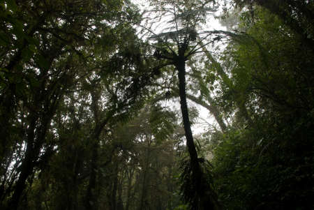 the dense green cloud forrest of central america