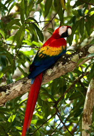 A colorfull macaw parrot perched on a branch photo
