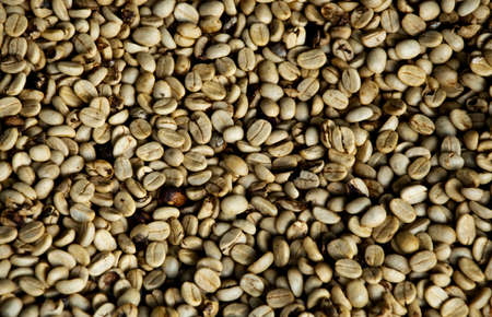 unroasted: A closeup of fresh unroasted coffe beans
