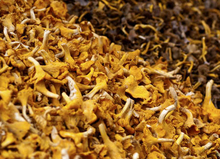closeup of different types of chanterelles at a market Stock Photo