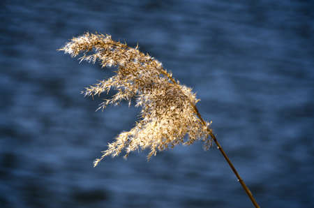 a reed bending in the wind on a summer day