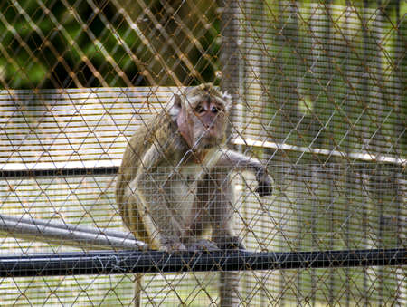 a monkey looking out from a cage photo