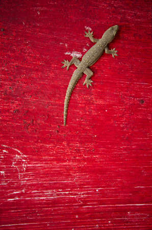 a gecko lizard sitting on a red surface Stock Photo