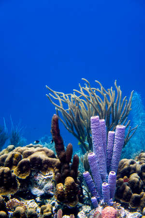 Corals in the tropical waters of Bonaire in the Caribbean
