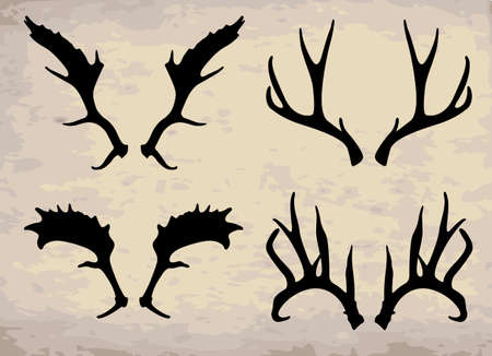 deer horn Illustration