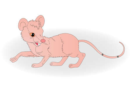 pinna: illustration of a rat with a long tail on a white background