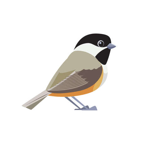 Black-capped chickadee is a small, songbird. It is a passerine bird in the tit family. Cartoon flat style beautiful character of ornithology, vector illustration isolated on white background