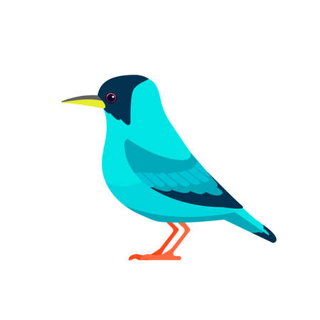 Green honeycreeper is a small bird in the tanager family. Chlorophanes spiza. Exotic blue Bird Cartoon flat style beautiful character of ornithology, vector illustration isolated on white