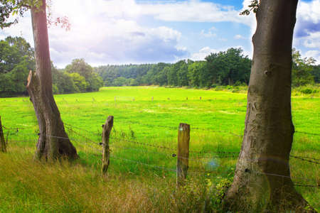 two trees and a meadow in the background Stock Photo - 14575998