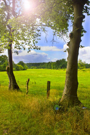 two trees and a meadow in the background