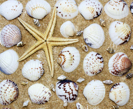 star-fish and shellfish sand background Stock Photo