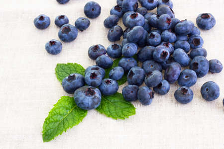fresh bilberries with mint leaf