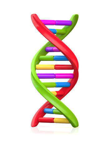 Colorful dna model structure , isolated on white photo