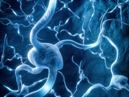 Human Nervous System, Nerve Cell