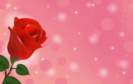 red wallpaper: Beautiful wallpaper with flower red rose