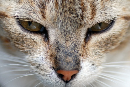 dangerously: The cat is looking us very dangerously. Stock Photo