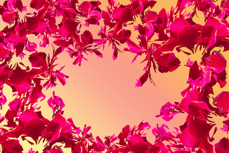 Pink flower frame on light orange background. photo