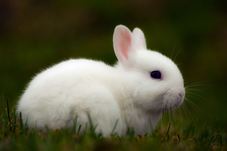 background green: Little cute bunny is in the grass. Stock Photo