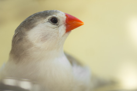 finch: Macro photo about a little finch bird. Stock Photo