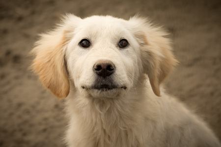 Animal portrait of cute lovely white dog or puppy.