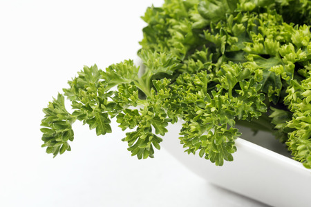 Fresh french parsley green herb in dish on white background.