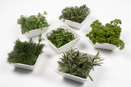 Fresh green herbs and spices for seasoning and decoration in six white little plate on white background.