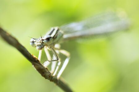 Macro photo of dragonfly insect in nature on green background. 写真素材