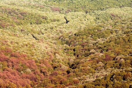 Beautiful landscape of colorful lush foliage in forest with autumn trees. 写真素材 - 129811208