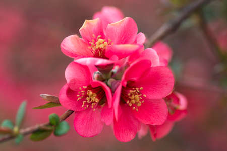 Close-up photo of blossoming beautiful pink spring flowers.
