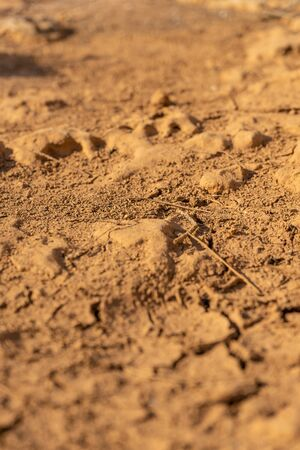 Dry cracked earth texture. Cracks in the dried soil. Desertification Stock fotó