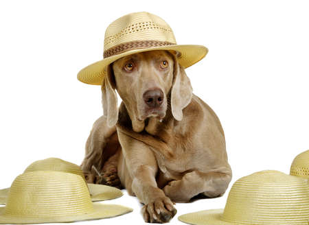 Dog in hat Stock Photo - 9801221