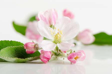 Beautiful apple flower