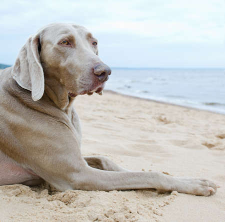 Dog waiting for his owner on seacoast Stock Photo - 15160251