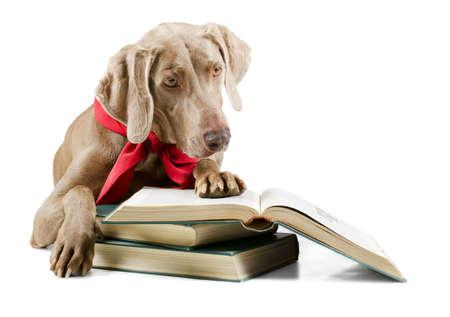 Dog reading book isolated on white background Stock Photo - 18115673