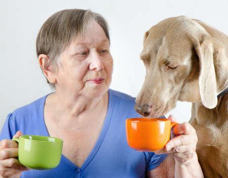 femme et chien: Senior femme avec chien de boire du th� Banque d'images