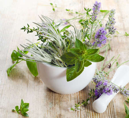 Fresh herbs on a wooden table Stock Photo - 20566232