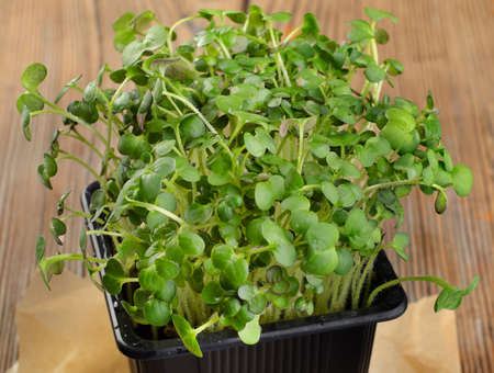 herbs boxes: Cress salad on a  wooden background.Selective focus Stock Photo