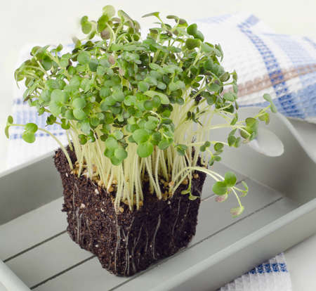 Fresh Cress salad in  wooden box. Selective focus