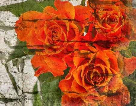 rosas naranjas: Fondo de la vendimia Vieja con rosas de color naranja.