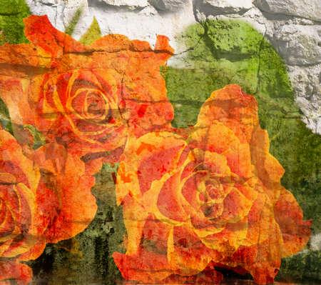 rosas naranjas: Viejo fondo del grunge de la vendimia con rosas de color naranja.