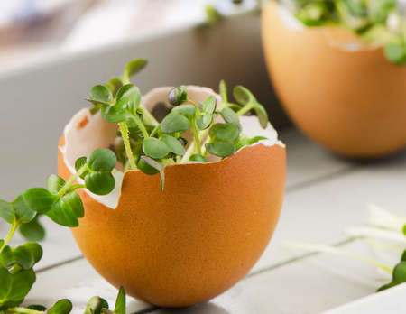 cress: Cress salad in an eggshell. Selective focus Stock Photo