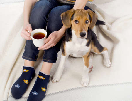 Woman relaxing with beagle puppy and cup of tea