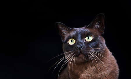 Young cat on black background