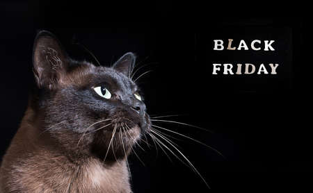 Young cat on black background. Black friday.