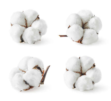 Set aus verschiedenen Baumwollblumen isoliert auf weiß