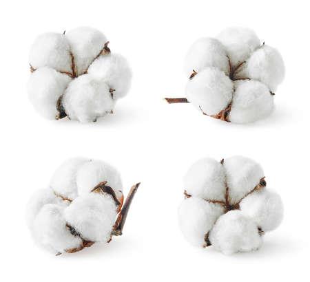 Zestaw różnych kwiatów bawełny na białym tle